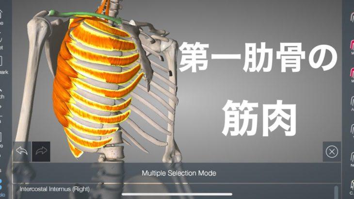 第一肋骨の筋肉の解説と痛みの関係を解説してみた