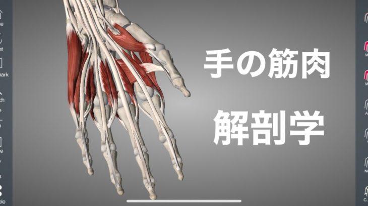 手と指の筋肉の解剖学を解説してみた