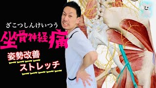 【坐骨神経痛】姿勢改善ストレッチ。太ももの裏の筋肉ハムストリングス!