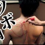肩甲骨の周りのツボと筋肉