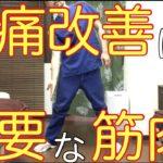 腰痛改善には非常に重要な筋肉です!  横浜市中区【腰痛専門】整体院桜花