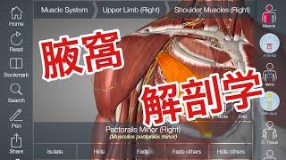 腋窩の解剖学:筋肉と神経、血管リンパの関係について解説してみた