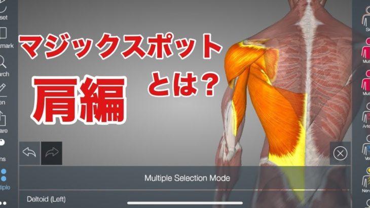 筋肉や筋膜が密集するマジックスポット:肩の解説をしてみた