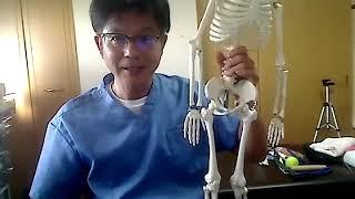 膝下O脚を直す為の筋肉アプローチ