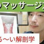 【ゆる〜い解剖学シリーズ】首の筋肉とマッサージポイント