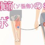 股関節(鼠径部)〜内もも痛い原因になる筋肉とツボ|開脚ストレッチで痛い