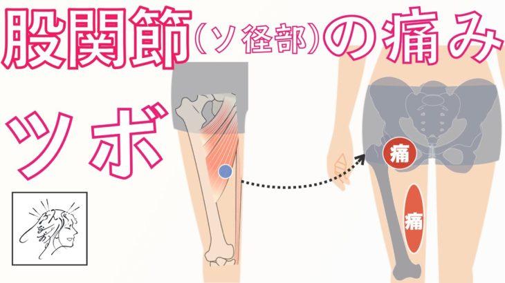 股関節(鼠径部)〜内もも痛い原因になる筋肉とツボ 開脚ストレッチで痛い