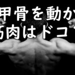 肩甲骨を動かす筋肉はどれ?