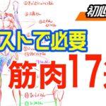 【イラストのための筋肉スカルプト】スカルピーで筋肉を造って勉強してみましょう!( ´ ▽ ` )ノ